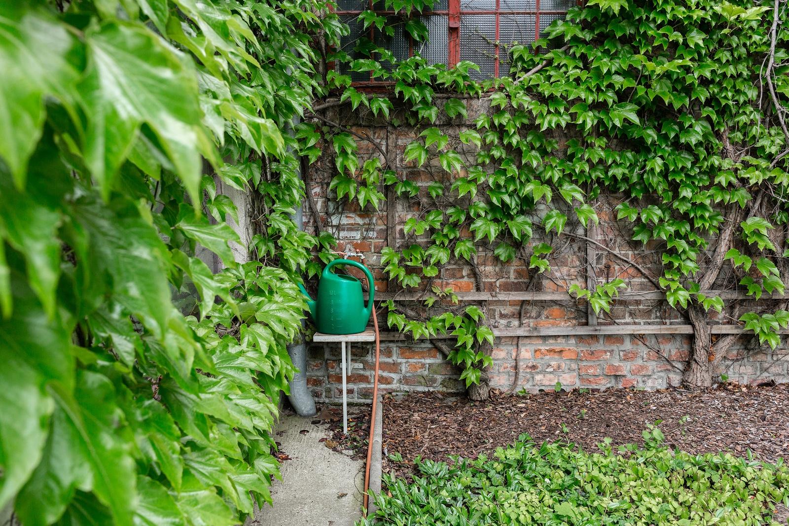 ivy-damage-to-old-brick.jpg