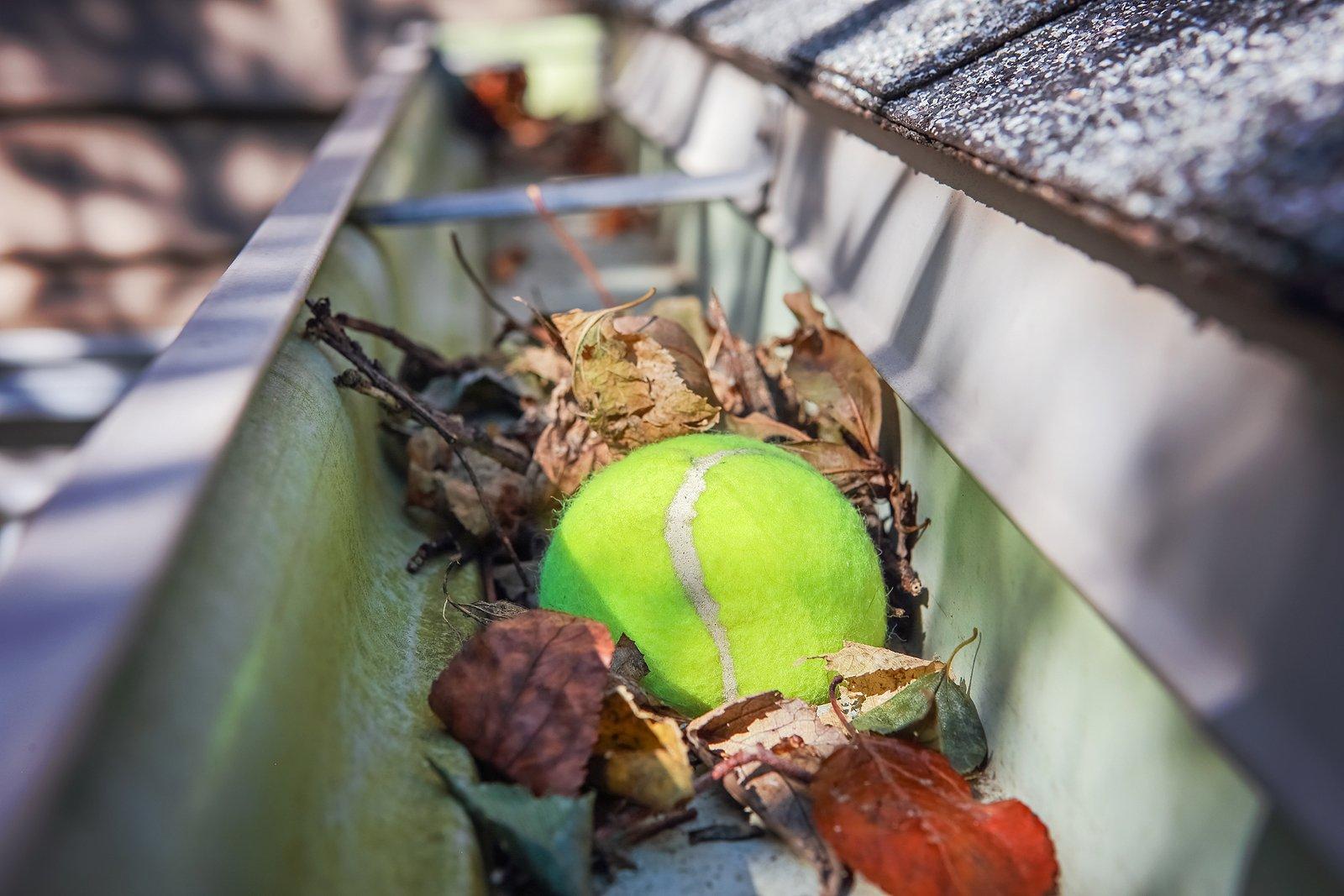 ennis-ball-leaves-stuck-in-gutter-renaissance-development-dc