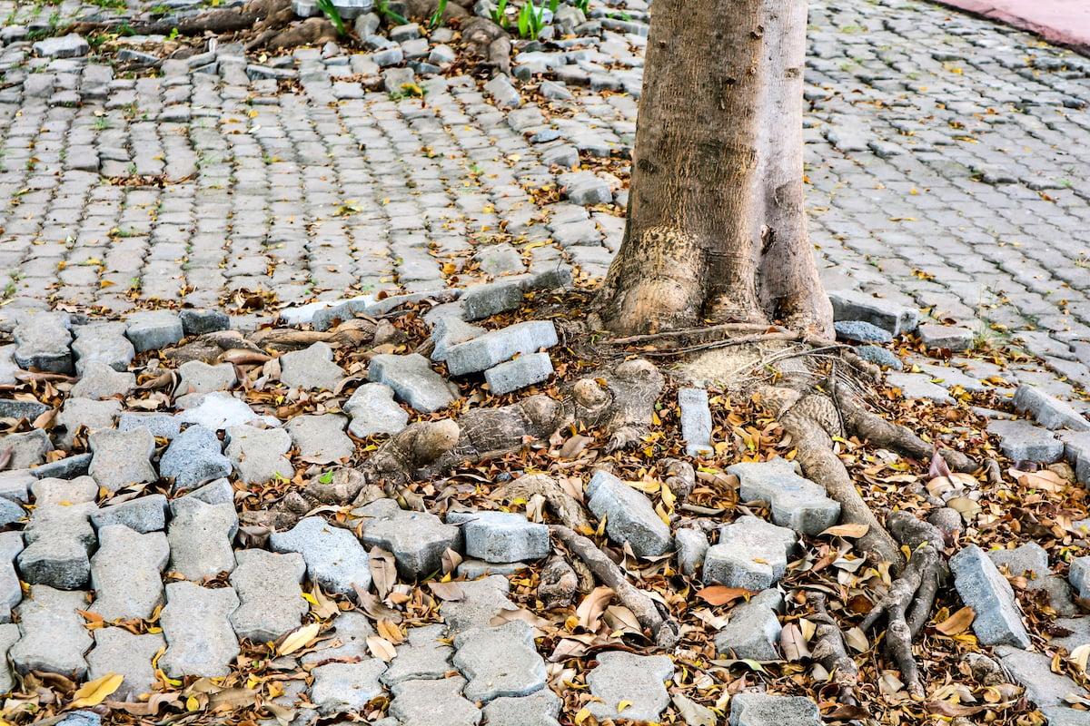 tree-roots-pavers-1200x800